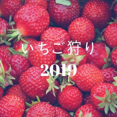 いちご狩り2019 (1)